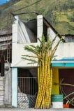 Coupez les morceaux de canne à sucre du côté du bâtiment en Equateur rural Photos stock