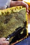 Coupez les nids d'abeilles Photos stock