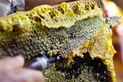 Coupez les nids d'abeilles Photographie stock