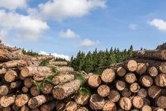 Coupez les pins Image libre de droits
