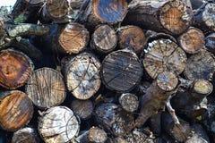 Coupez les rondins d'arbre empilés dans la forêt Photo libre de droits