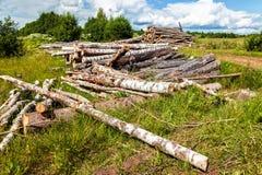 Coupez les rondins d'arbre empilés près d'un chemin forestier Photographie stock libre de droits