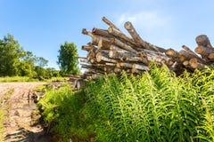 Coupez les rondins d'arbre empilés près d'un chemin forestier dans le jour d'été Images stock