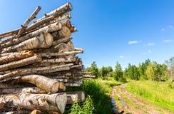 Coupez les rondins d'arbre empilés près d'un chemin forestier dans le jour d'été Photo libre de droits