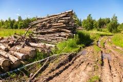 Coupez les rondins d'arbre empilés près d'un chemin forestier dans le jour d'été Photographie stock libre de droits