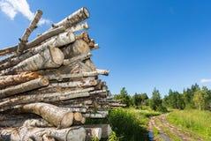 Coupez les rondins d'arbre empilés près d'un chemin forestier dans le jour d'été Photographie stock