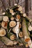 Coupez les rondins en bois Photographie stock libre de droits