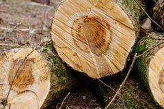 Coupez les rondins en bois Images libres de droits