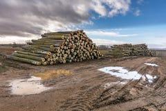 Coupez nouvellement les troncs de pin pour le transfert à la scierie photographie stock libre de droits