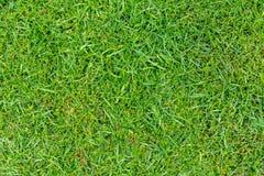Coupez parfaitement le fond de verdure d'herbe Images stock