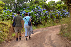 Couple. Walking among flowers Royalty Free Stock Images