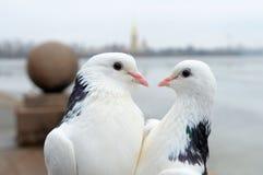 Couple. Stock Photos