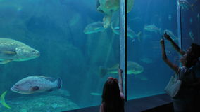 Couple admiring sea turtle swimming with fish. At the aquarium stock video footage