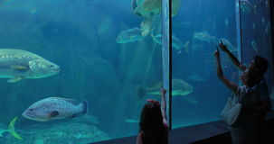 Couple admiring sea turtle swimming with fish. At the aquarium stock video
