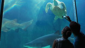 Couple admiring sea turtle swimming with shark. In aquarium stock footage