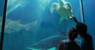 Couple admiring sea turtle swimming with shark. In aquarium stock video footage