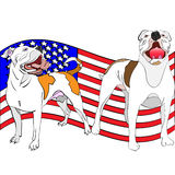 A couple of american bulldogs in front of a waving american flag. Hand-drawn, outlined, vector illustration of a couple of american bulldogs in front of a waving vector illustration