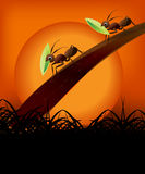 Couple of ants in the sunset. Kind of Urban Art couple of ants still working in the sunset between black and orange color Royalty Free Stock Photo