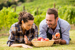 Couple with apple basket at vineyard Stock Photography