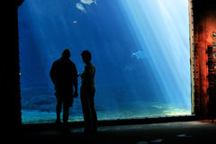 Couple in aquarium Royalty Free Stock Photo