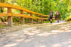 Couple backpacker hiking in forest pathway Royalty Free Stock Image