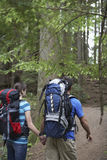 Couple With Backpacks Walking In Forest Stock Photos
