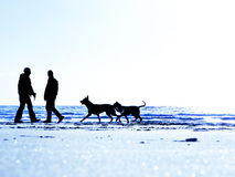 Couple beach dogs walking Stock Photo