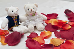 Couple bears and red petals. Background Stock Photo