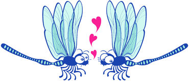 Couple of beautiful blue dragonflies tenderly falling in love Stock Image