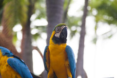 Couple of beautiful parrots. Sit and look at people stock photo