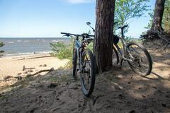 Couple of bicycles standing under pine trees on a sandy beach royalty free stock photo