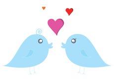 Couple bird. On white background Royalty Free Stock Photography