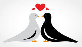 A couple bird falling in love Stock Images