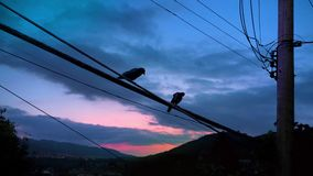 Couple Of Birds Fly Off stock footage