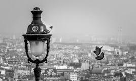 Couple of birds in Paris. Birds in love in Paris Stock Photos