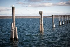 Seagulls on poles. Couple of birds sitting on a poles in ocean Royalty Free Stock Photos