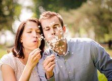 Couple blowing dandelions Stock Photography