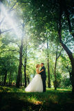 Couple bride and groom on the background of the park`s trees Royalty Free Stock Photography