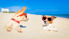 Couple of buried dogs Stock Photos