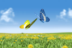 Couple of Butterflies Royalty Free Stock Images