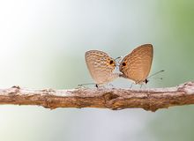 Couple butterfly making love Stock Photos