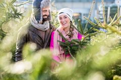 Couple buying Christmas tree on market Stock Photography