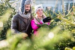 Couple buying Christmas tree on market Royalty Free Stock Images
