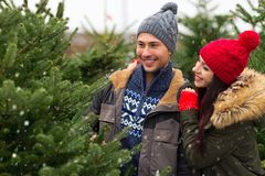 Couple buying Christmas tree Stock Images