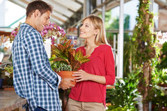 Couple buying plant in garden center Stock Images
