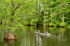 Couple Canoeing on Greenfield Lake. Couple canoeing in the lake surrounded by Cypress trees. Greenfield Lake, Wilmington, NC Royalty Free Stock Photography