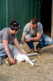 Couple caring for farm goat Stock Photography