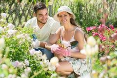 Couple caring their garden Stock Photos