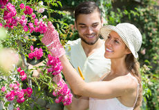 Couple caring their garden Royalty Free Stock Image