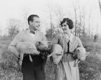 Couple carrying pigs Stock Photos